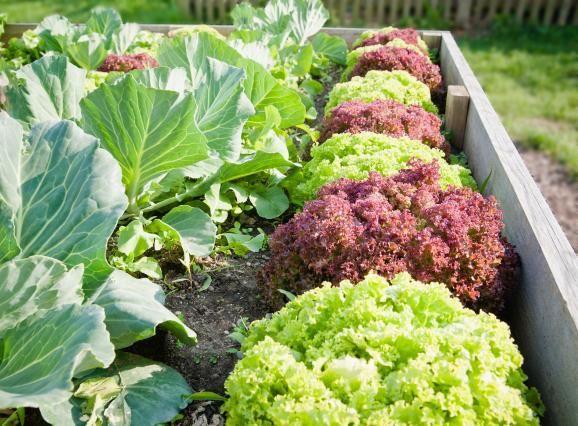 Hochbeet Bauen Und Bepflanzen So Geht S Garten And Gardens