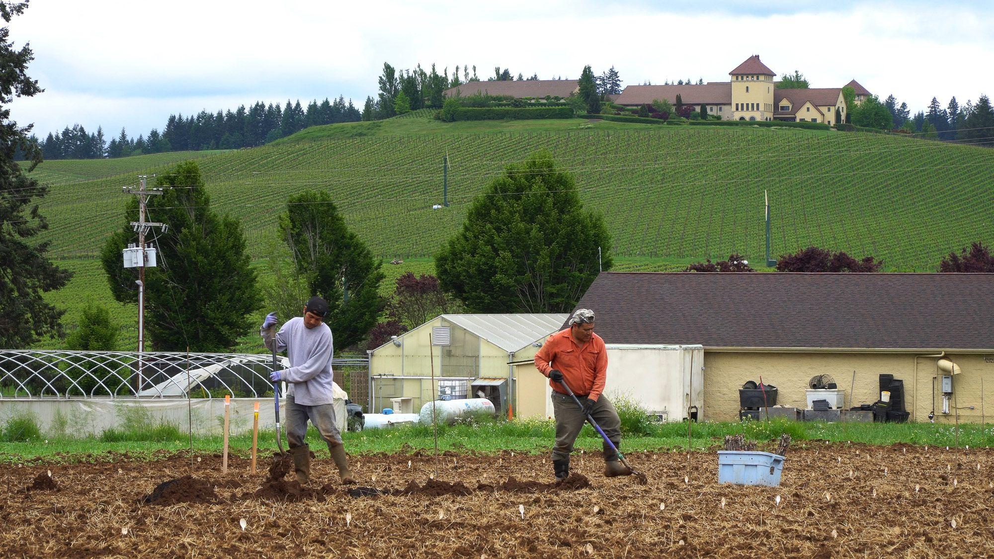 Oregon's King Estate Becomes Largest Biodynamic Vineyard in U.S.