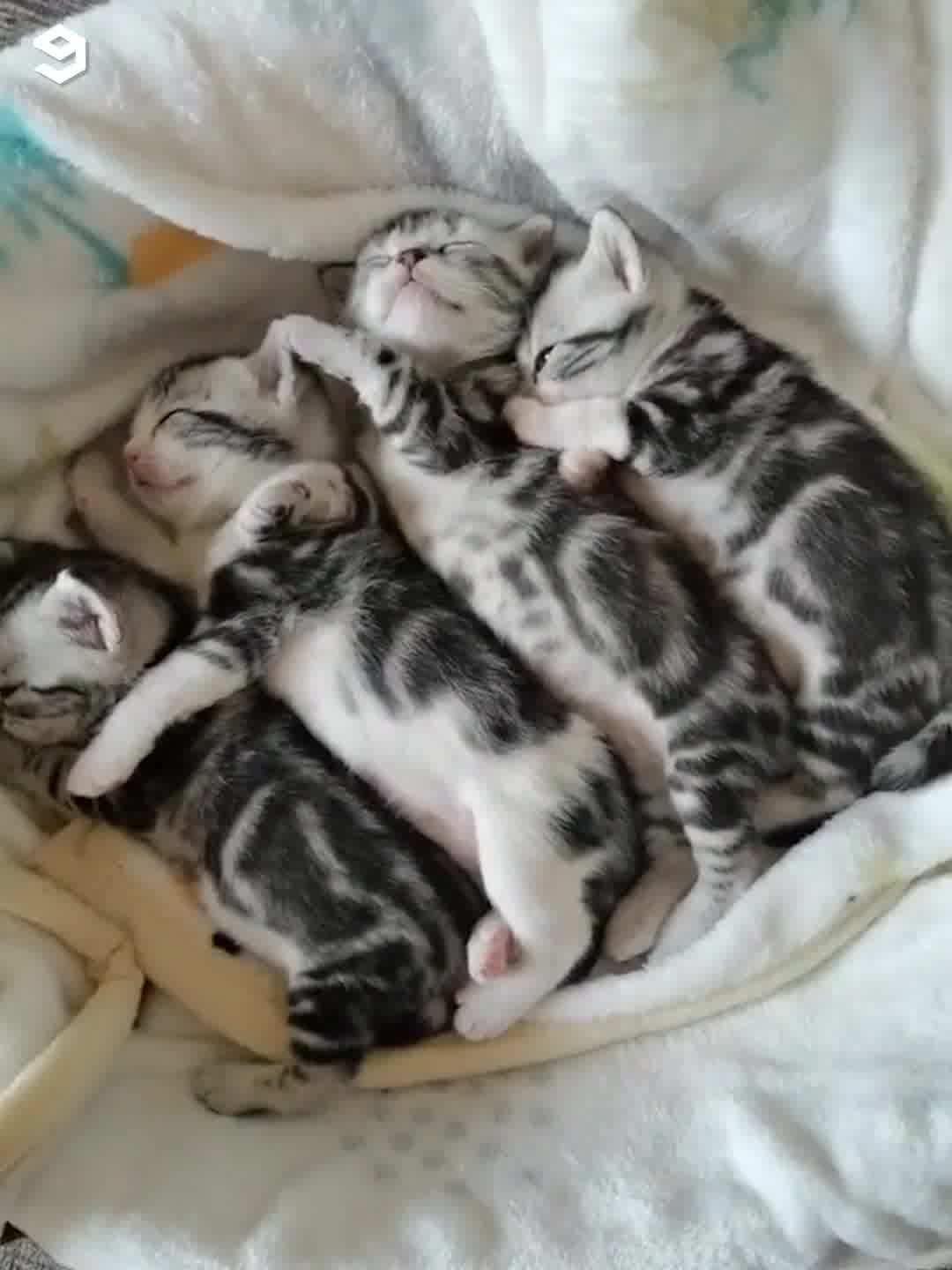 Kittens Napping Together Cute Baby Animals Cat Breeds Kittens Cutest