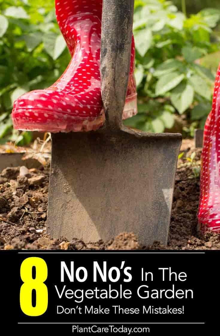 8 No No\'s In The Vegetable Garden