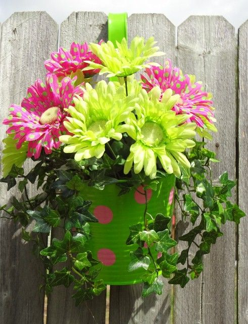 Polka Dot Gerbera Daisies In A Planter With Images Container