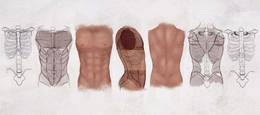AS Drawing the Male Torso by ConceptCookie.deviantart.com on ...