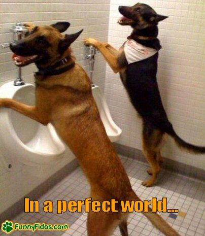 Funniest Dog In The World Pictures