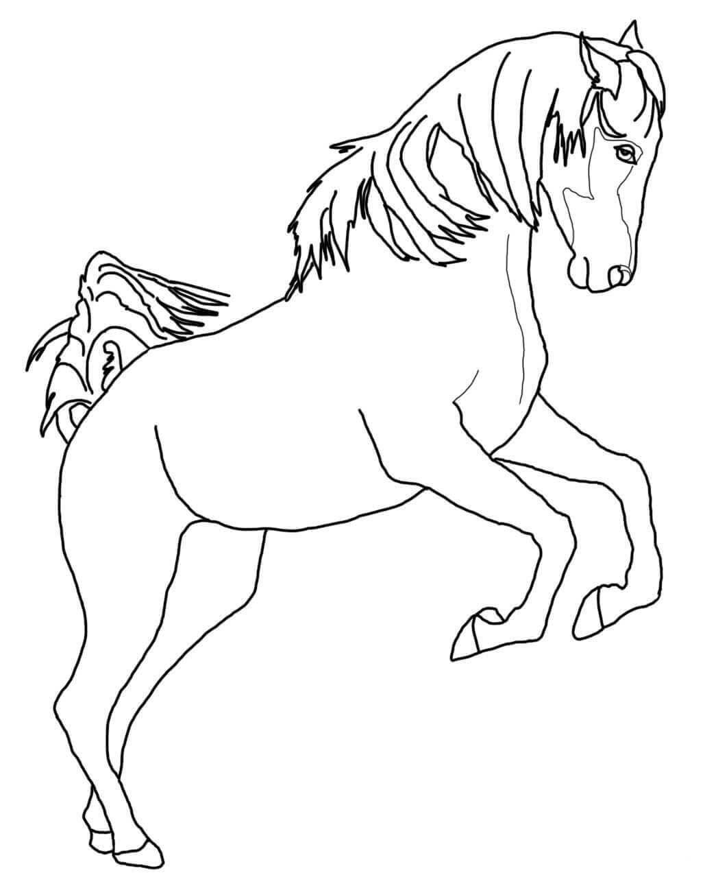 Rearing Arabian Horse Coloring Page Horse Coloring Pages Horse Coloring Animal Coloring Pages