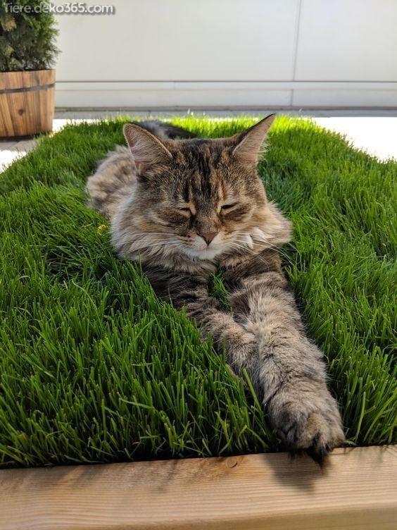 Photo of Plantas de interior seguras únicas y creativas para el mejor de los gatos (plantas de interior para …