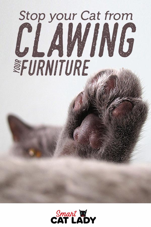 Cats In The Cradle Lyrics Catsyellow Warriorcats Cat Care