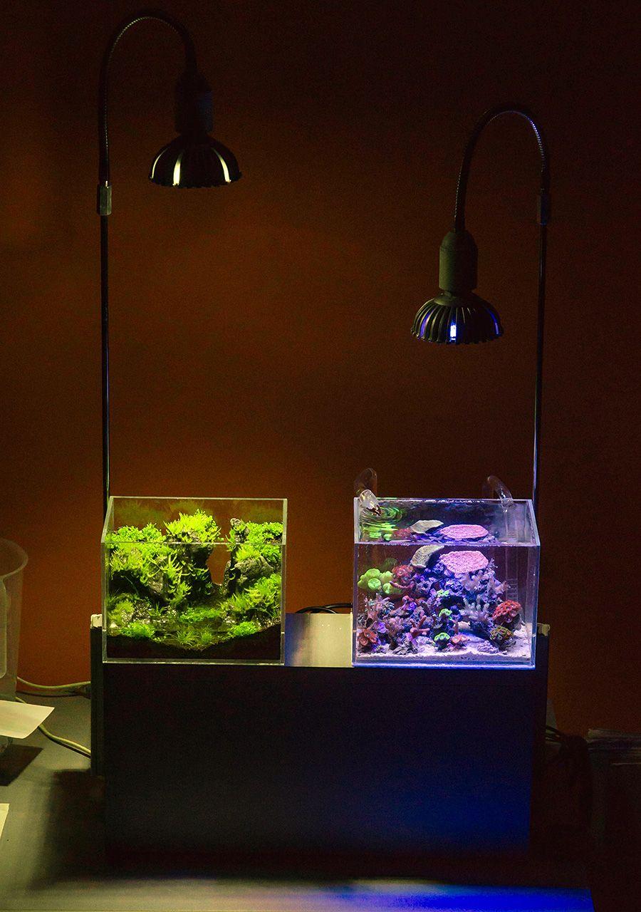 Freshwater aquarium fish profiles - Dafil 2014 Featured Nano Reefs Featured Aquariums Monthly Featured Nano Reef Aquarium Profiles