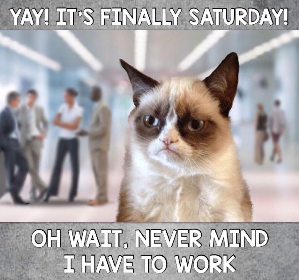 Grumpy Cat Work Cat Work Grumpy Cat Cat Quotes