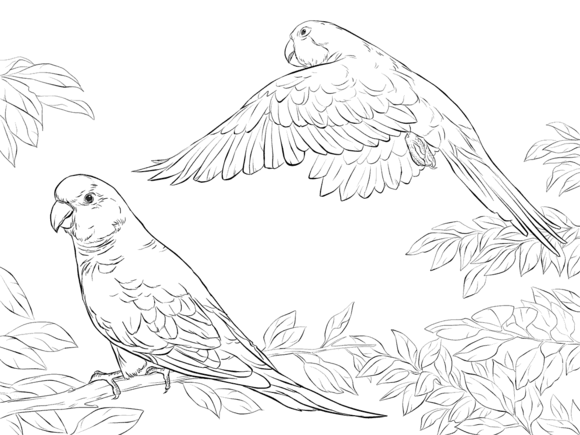 Two Quaker Parrots Coloring Page Free Printable Coloring Pages Bird Coloring Pages Animal Coloring Pages Coloring Pages