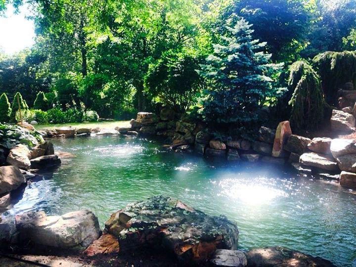 fae5fc6e356886ea87d3abd9dba5ed9c - The Koi Whisperer Sanctuary & Japanese Gardens
