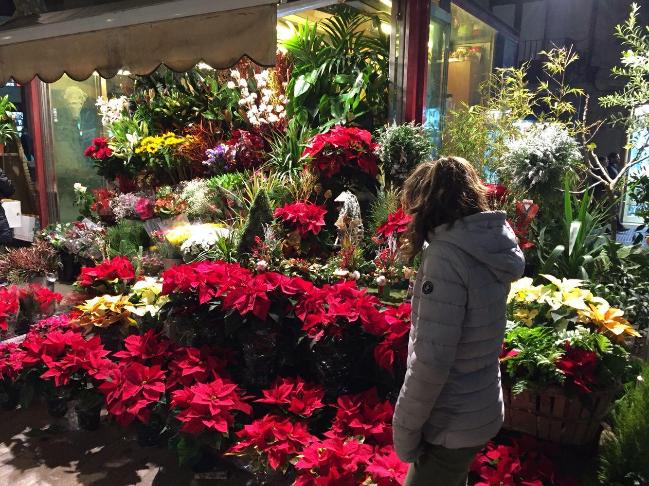 Flor de Pascua - Ponsettia - Mercado de Flores - Flower Market