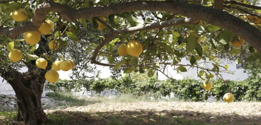 Tipos de rboles frutales para el jard n http www for Tipos de jardines