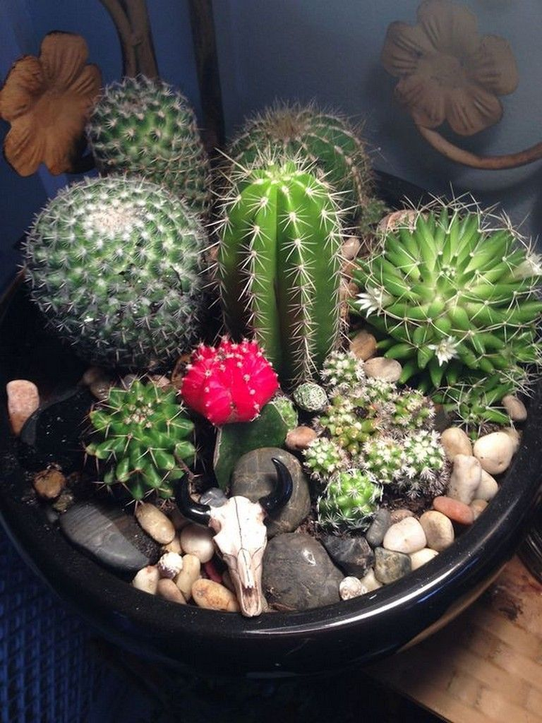 28+ Lovely Cactus and Succulent Garden Ideas for Indoor is part of Cactus terrarium, Succulents garden, Cacti and succulents, Mini cactus garden, Cactus plants, Cactus garden - Whenever you're prepared for planting and have chosen your plant, you'll want to know the best way to plant an outdoor succulent garden  The vegetation are normally grown in little pots, their roots suspended into the nutrient resolution with no… Continue Reading →