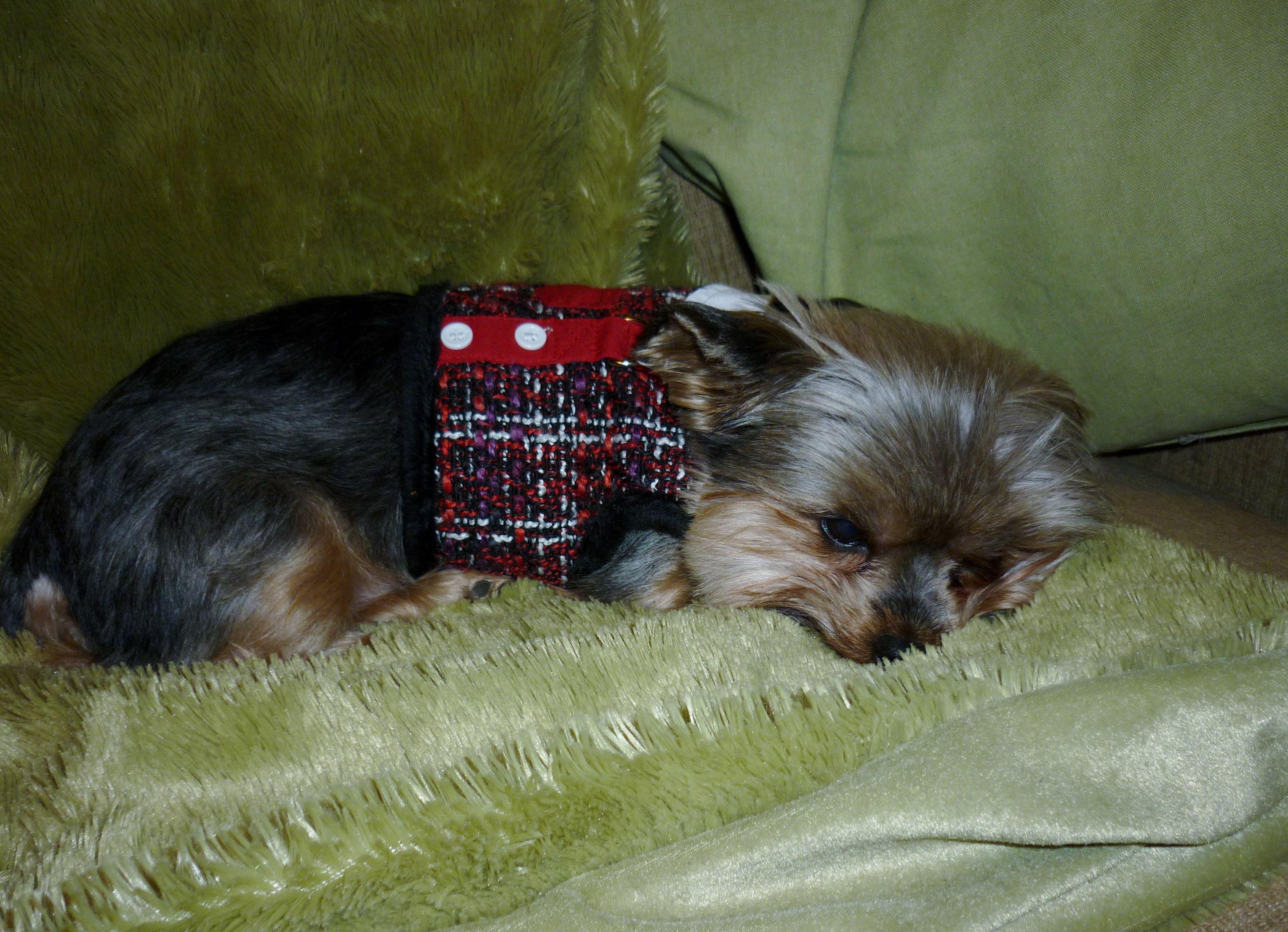 Rudy Valentino sleeping off Thanksgiving dinner.