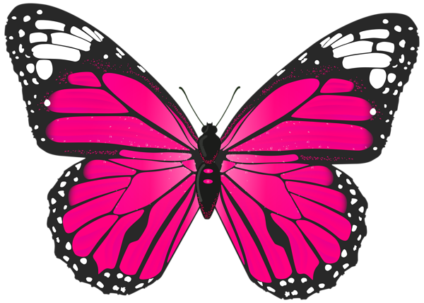 24++ Pink butterfly outline clipart information