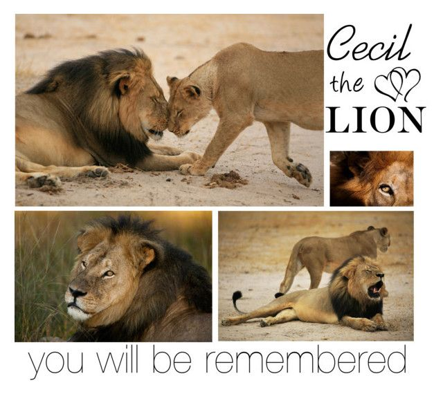 """""""Cecil the Lion"""" by roxi12311 ❤ liked on Polyvore"""