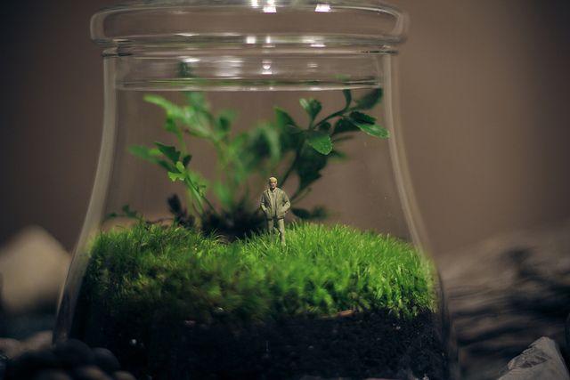 Green Bell Terrarium