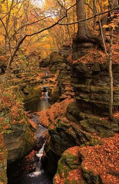 autumn - Pewit's Nest Canyon, Baraboo, Wisconsin