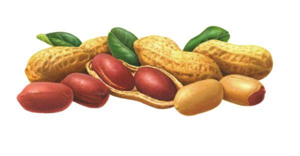4 Peanuts 2