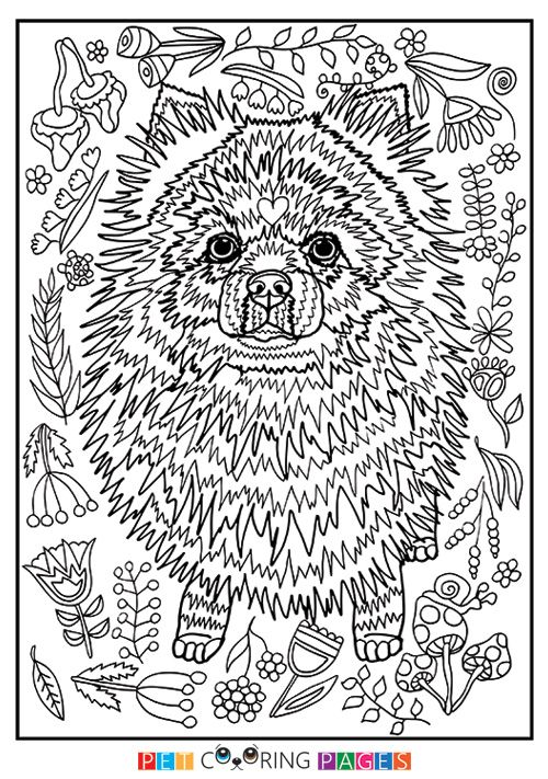 Free printable Pomeranian coloring page available for download ...