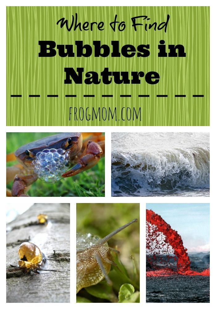 Where To Find Bubbles In Nature Frog Mom Outdoor Activities For Kids Bubble Activities Kids Learning Activities