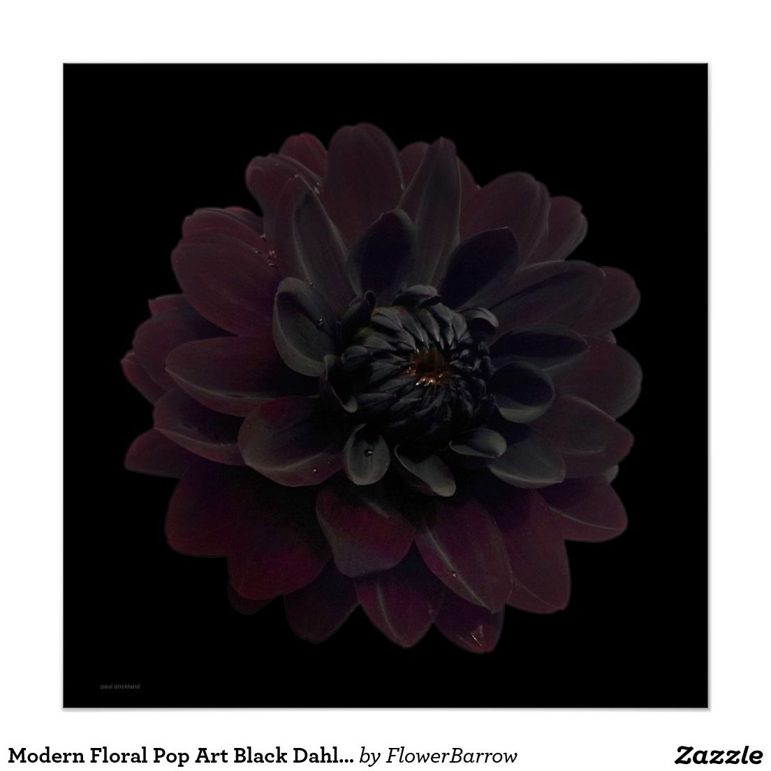 Modern floral pop art black dahlia flower on black poster floral modern floral pop art black dahlia flower on black poster izmirmasajfo