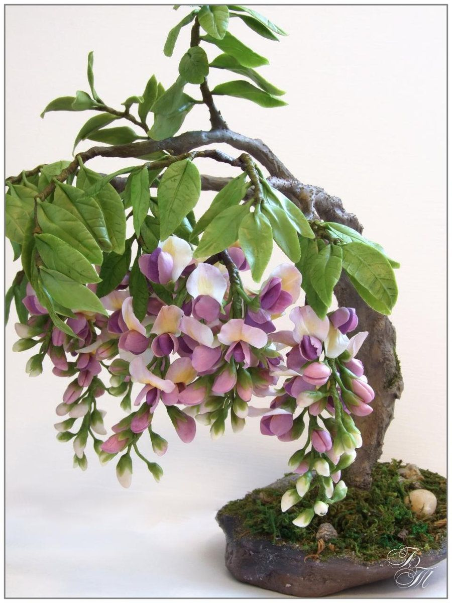 Wistaria by bonsai pinterest for Bonsai pflanzen