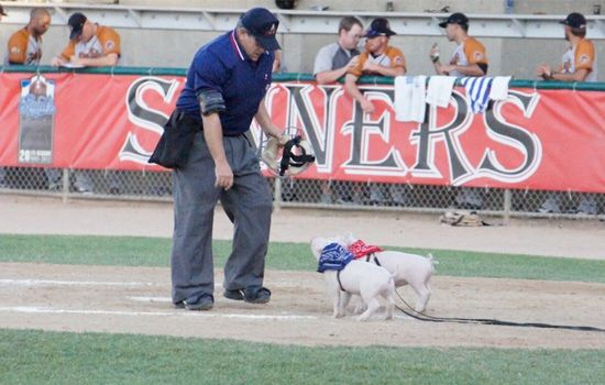 The umpire at the St. Paul Saints game spent all nine innings worried about porked bats.