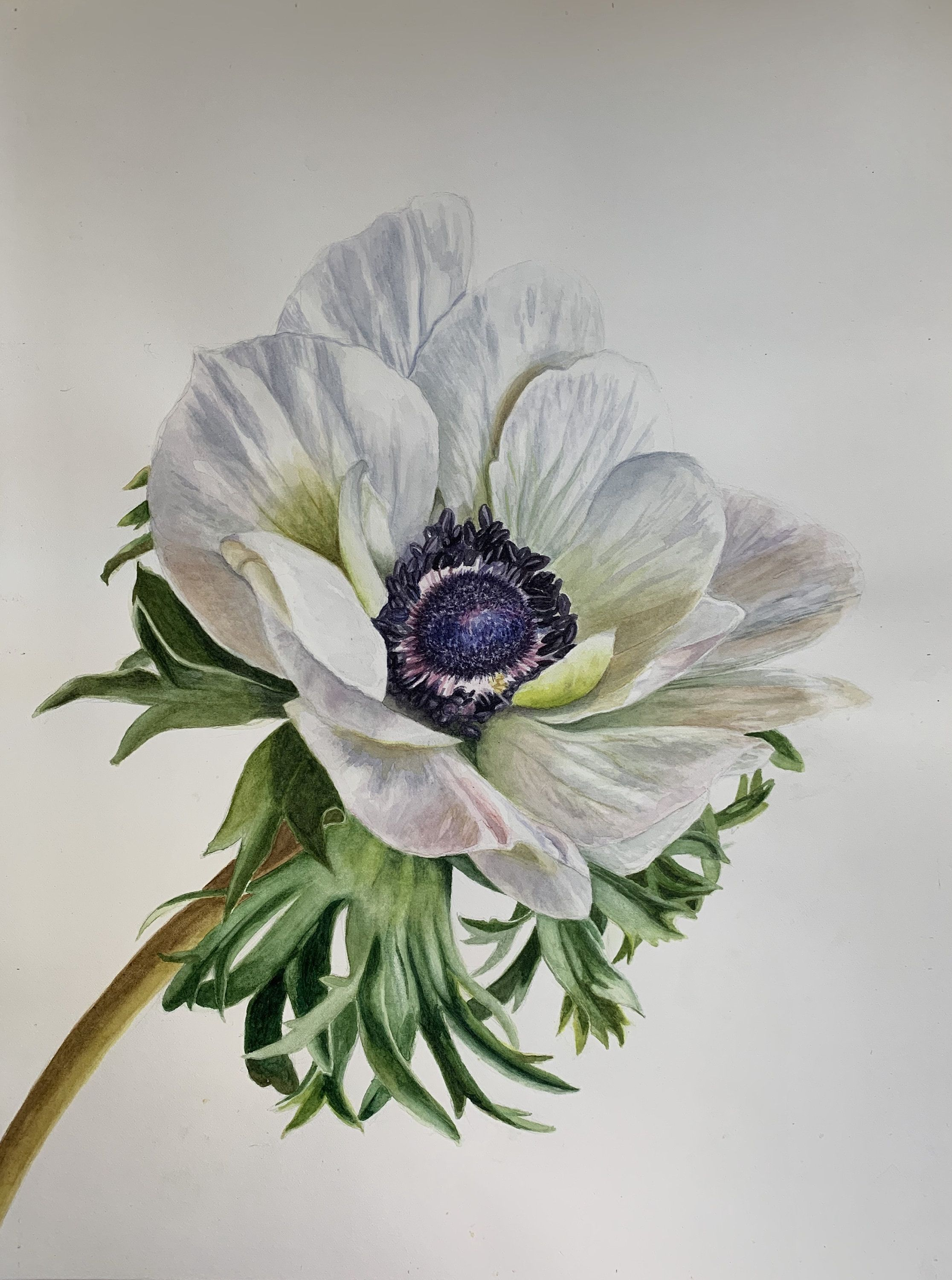 Excited To Share The Latest Addition To My Etsy Shop Anemone Https Etsy Me 38wjccy Art Painting Realistic Flower Drawing Thistle Painting Flower Drawing
