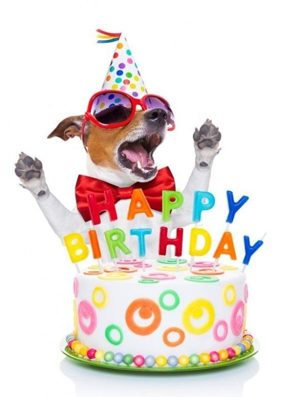 Картинки с собаками и поздравлением с днем рождения