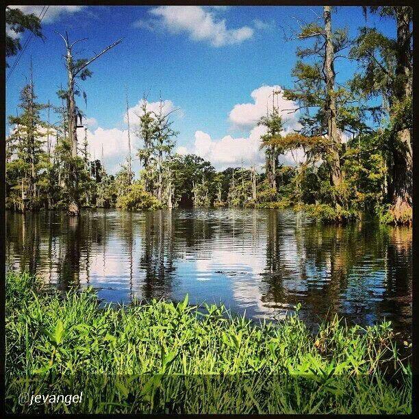Pin on Louisiana My State