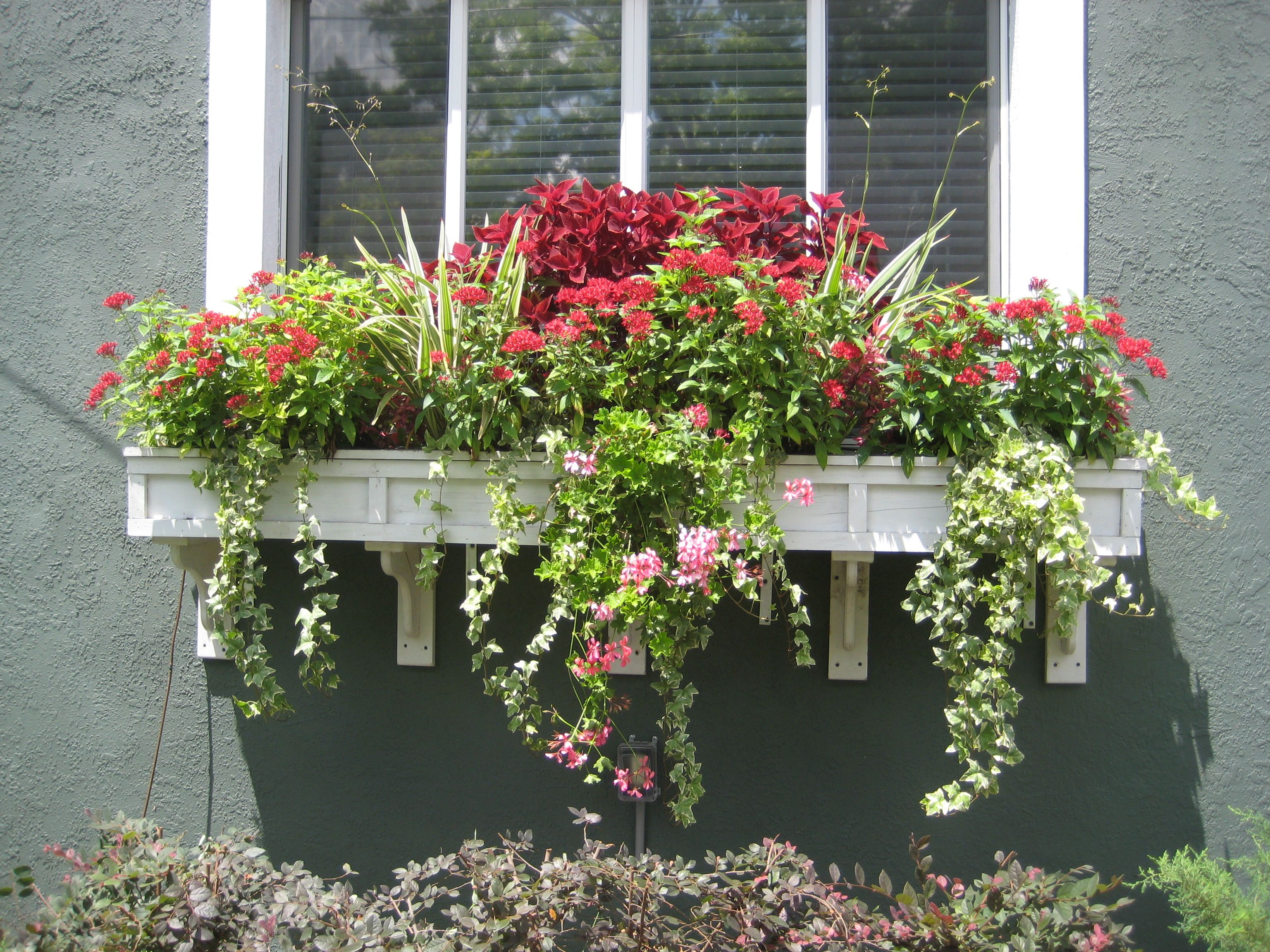 Window box ideas without flowers  window box contest entry study in burgundy  window box contest