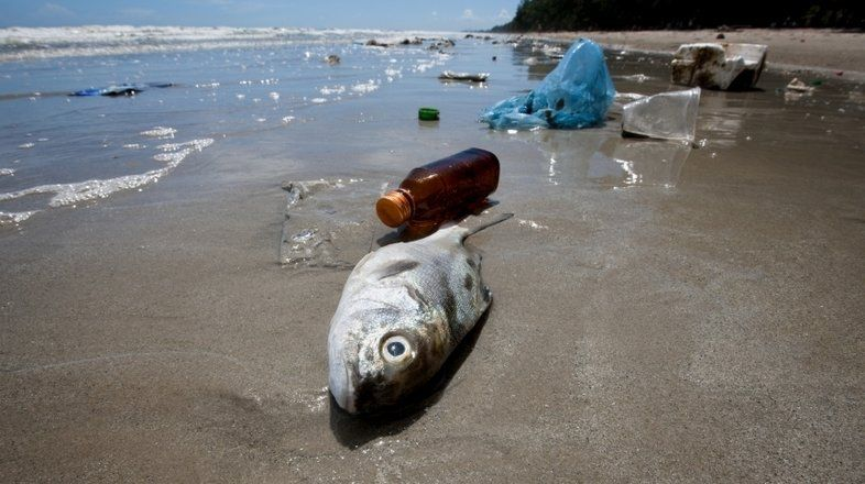 How Plastic In The Ocean Is Contaminating Your Seafood- The fish we eat are exposed to toxic chemicals in the rivers,bays and ocean they inhabit. Mercury is just one of a slew of synthetic and organic pollutants that fish can ingest and absorb into their tissue, which is bad for humans because we eat fish.Thhe problem we are facing is cause because we're dumping chemicals right into the ocean.To stop pollution we should collect waste and trash from local lakes and water streams.