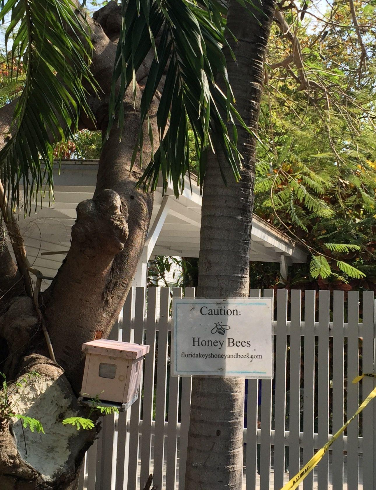 Making Florida Keys honey in a Key West back yard on Whalton Street.