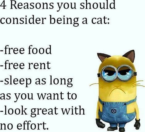 25 Hilarious New Minions Memes Funny Enough To Lol At Minions Funny Funny Minion Pictures Minions Quotes