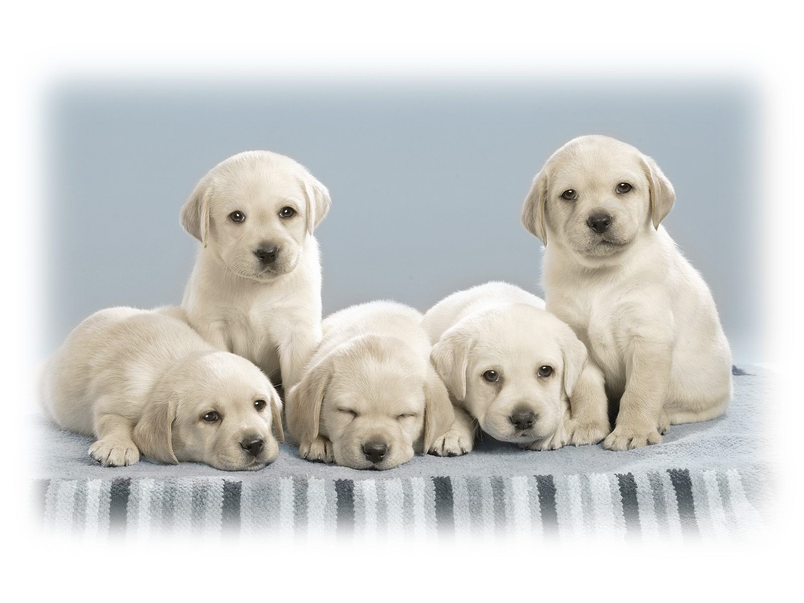 Yes bone crushingly cute puppies so cute they ll knock you over