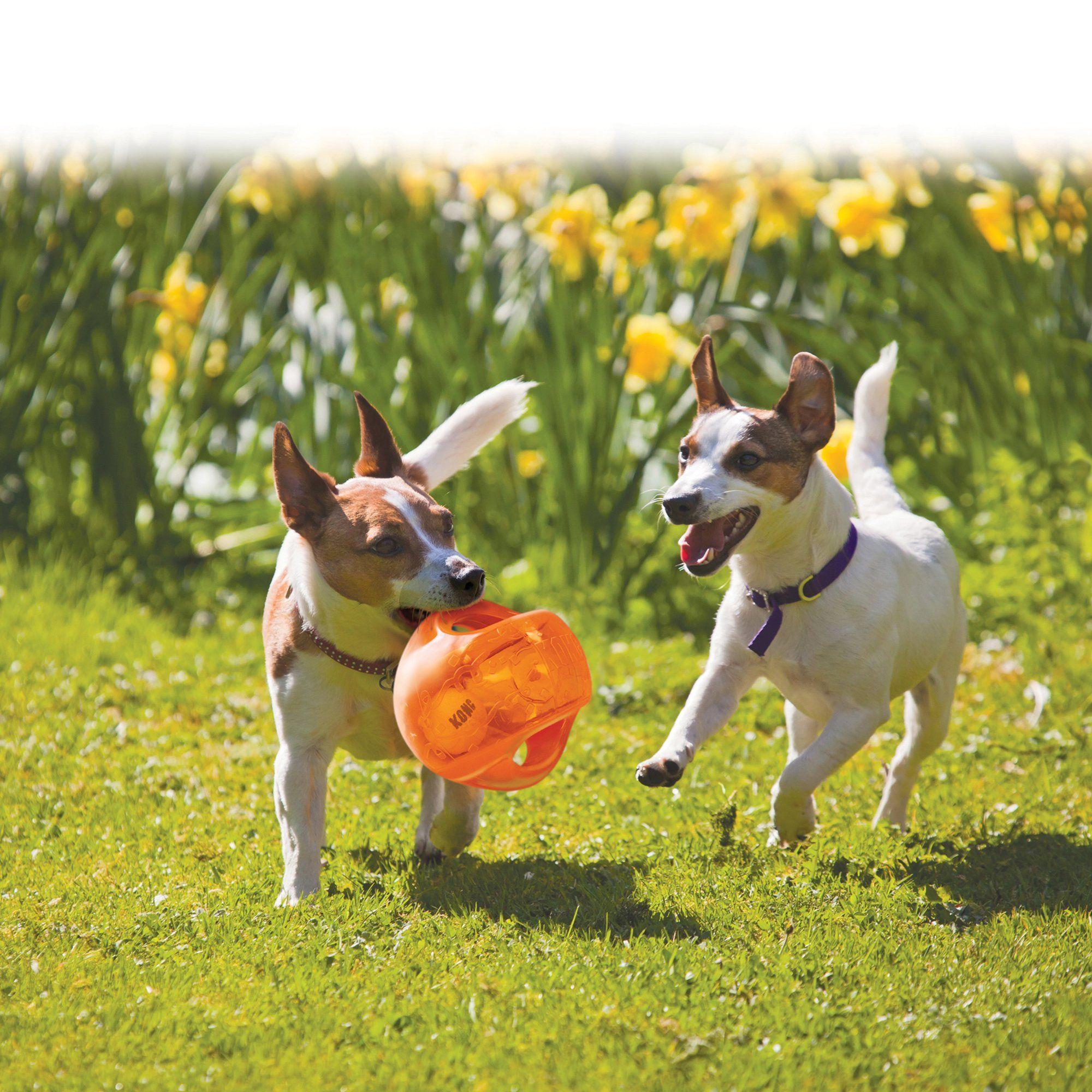 Kong Jumbler Ball Dog Toy Large Assorted Interactive Dog Toys Dog Toys Dogs