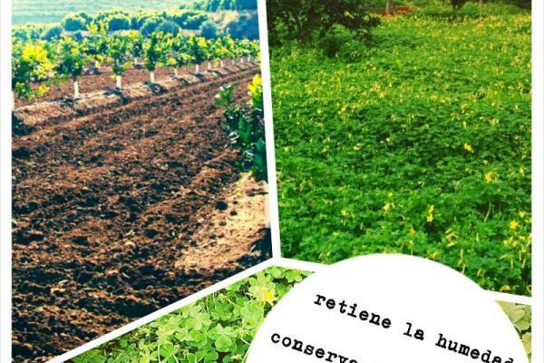 La asociaci n de cultivos en el huerto asociaci n de for Asociacion de plantas en el huerto