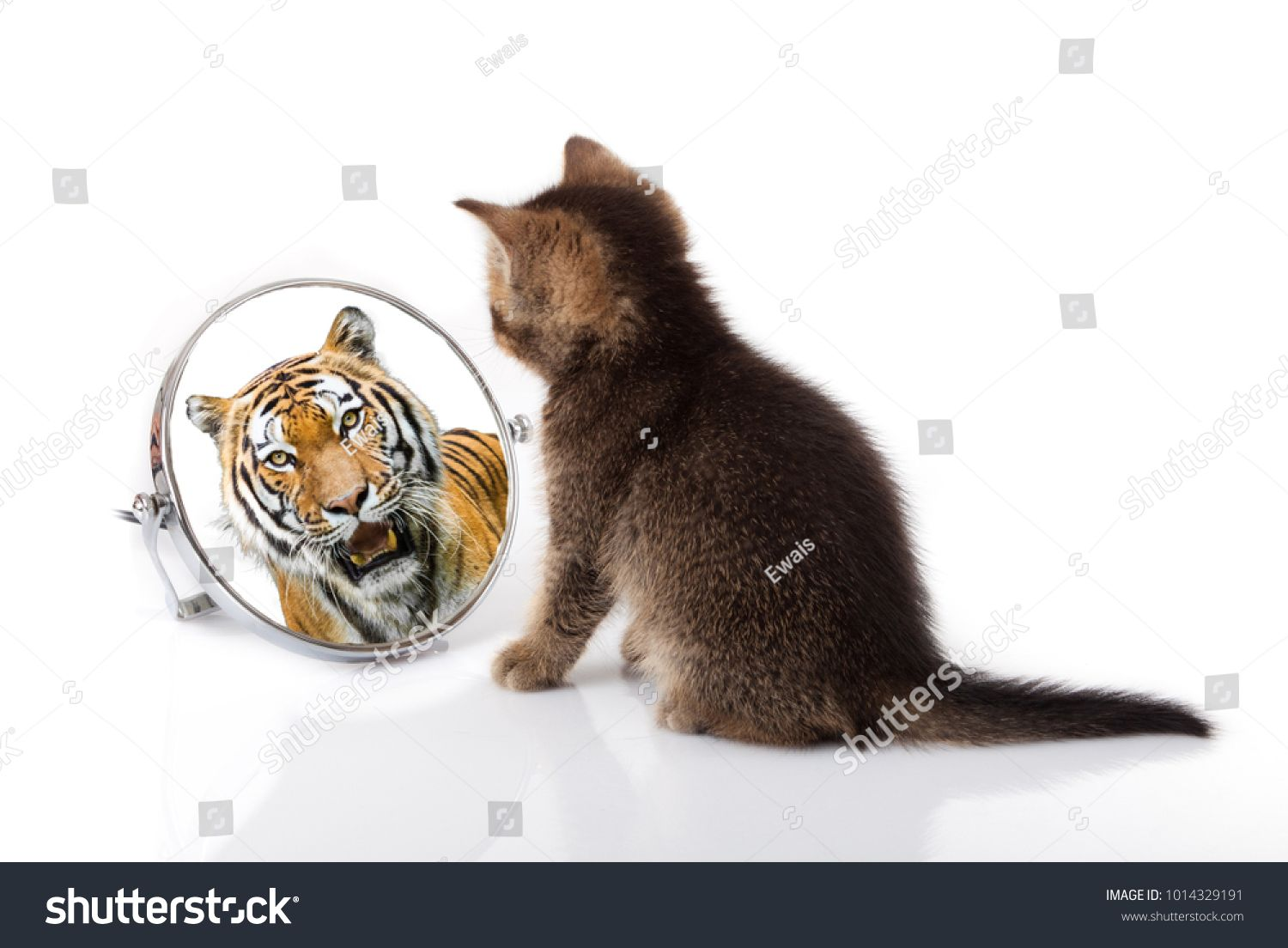 Kitten With Mirror On White Background Kitten Looks In A Mirror Reflection Of A Tigerwhite Mirror Kitten Tiger Tiger Images Kittens Mirror Reflection