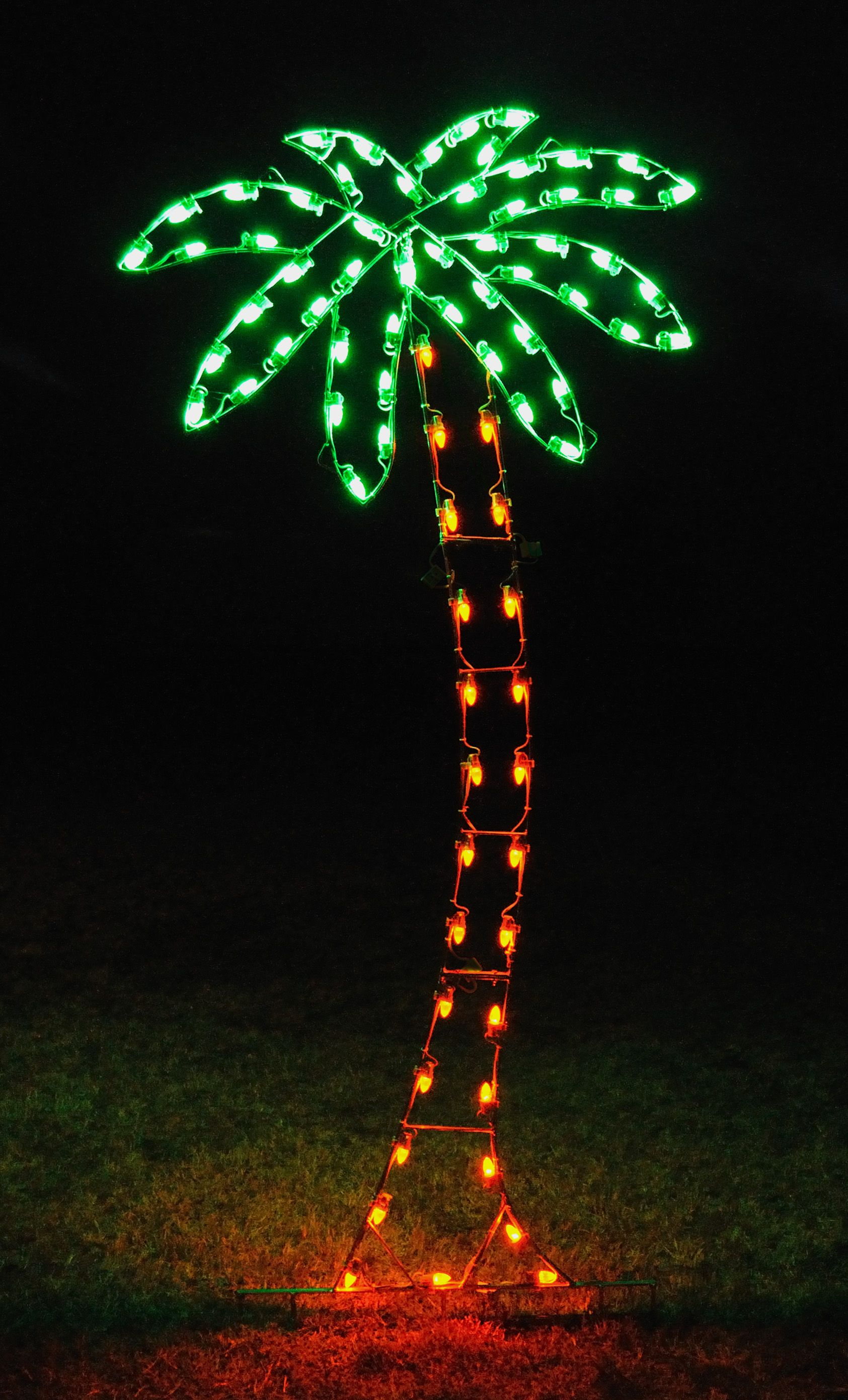 Holiday Lighting Palm Tree
