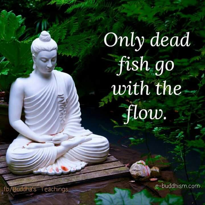 Only Dead Fish Go With The Flow Quotes Pinterest
