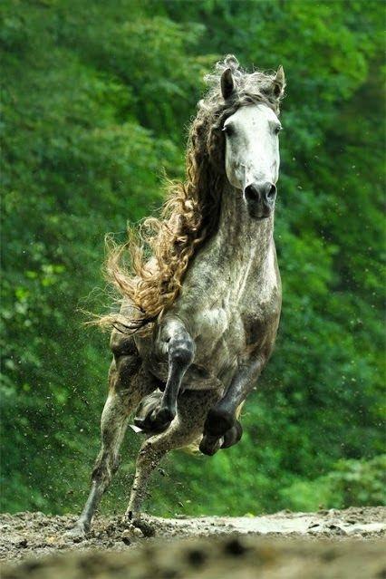 ラブリー美しい 馬 かっこいい 画像 - すべての動物画像