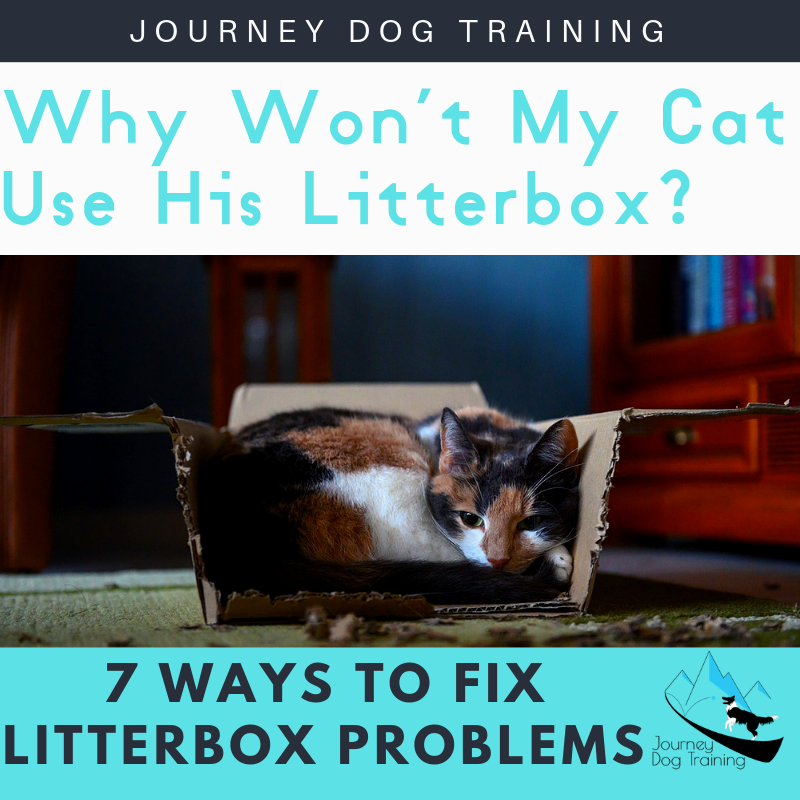 Why Won't My Cat Use His Litterbox Cat Behavior Problems