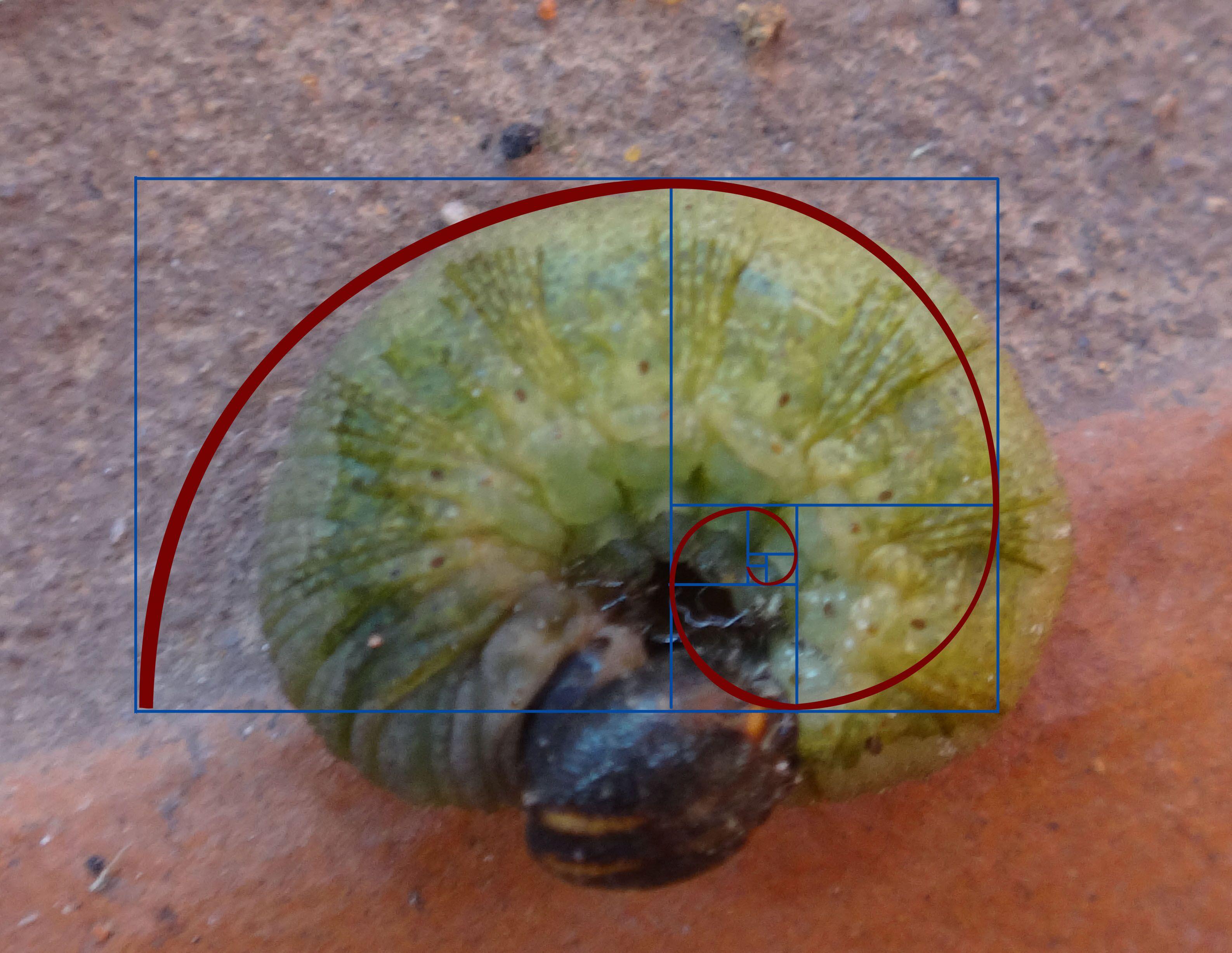 Fibonacci - lagarta
