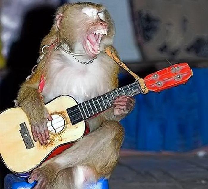 熱唱する猿の爆笑画像