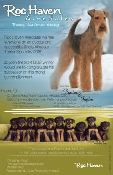 Pin On Airedale Terrors