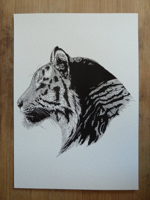 Temperate Tiger giclee print by Laura Dumbrell