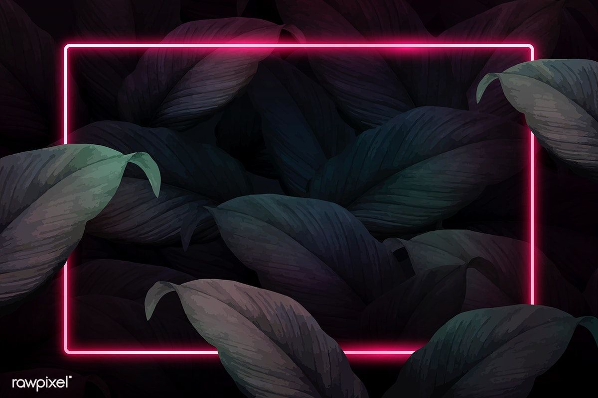 Download Premium Vector Of Rectangle Pink Neon Frame On Tropical Leaves Flower Background Wallpaper Neon Backgrounds Neon Wallpaper Jungle leaves, palm leaves engraved style. neon wallpaper