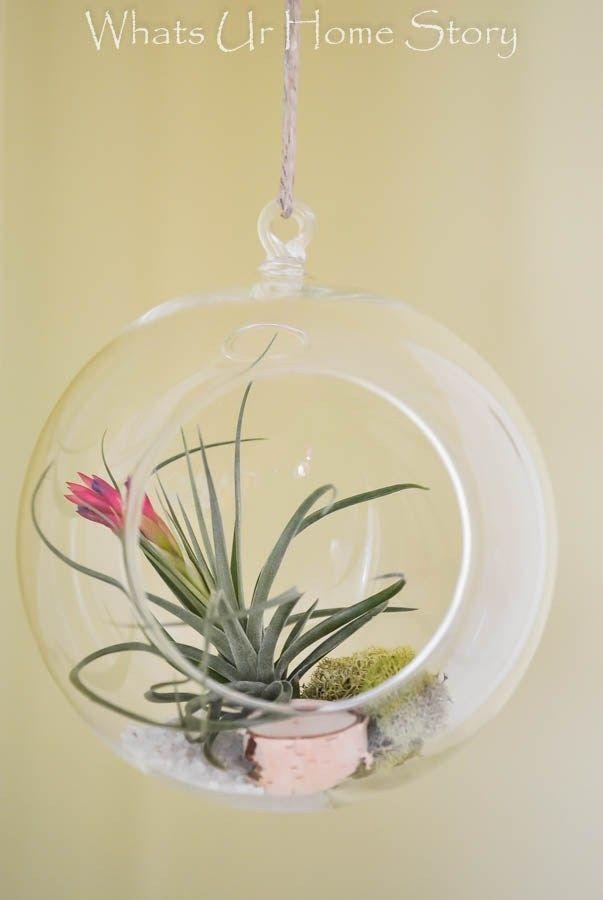 DIY Terrarium with Air Plants | Hanging air plants, Air ...