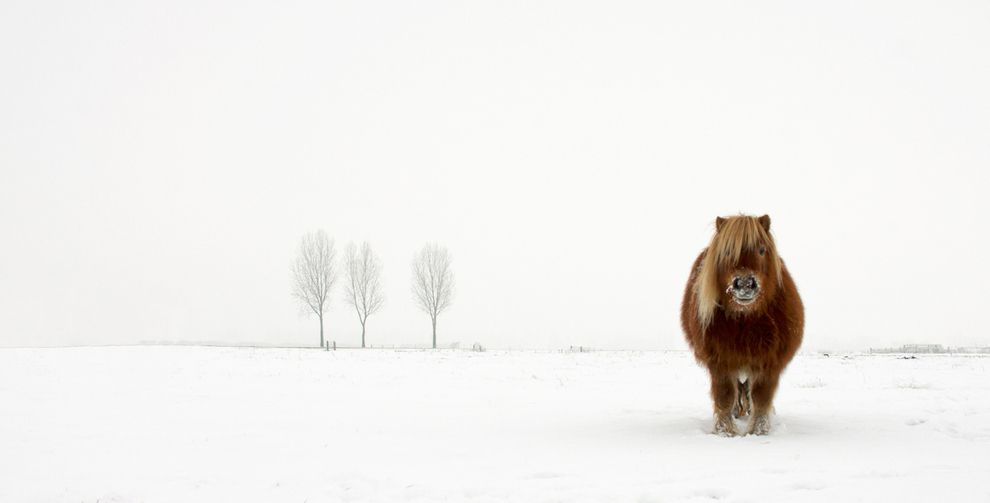 The Cold Pony Netherlands By Gert Van Den Bosch Photography